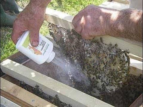 Обработка пчел от клеща осенью - как и чем лучше ' пчелы '