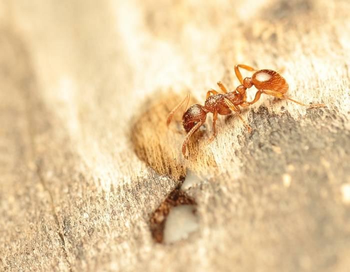 Клещи муравьи паук тля зеленая
