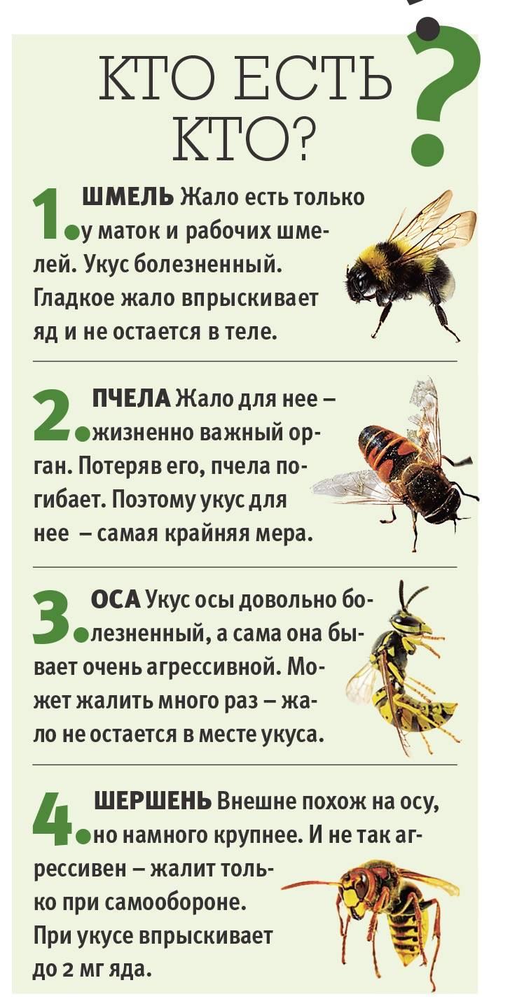 Пошаговая инструкция: что делать, если укусила оса