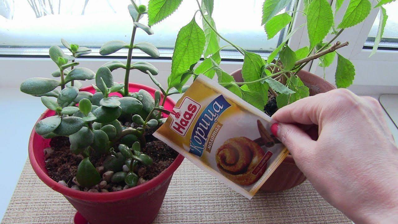 Как избавиться от мошек в цветочных горшках в домшних условиях: народные и химические средства, отзывы