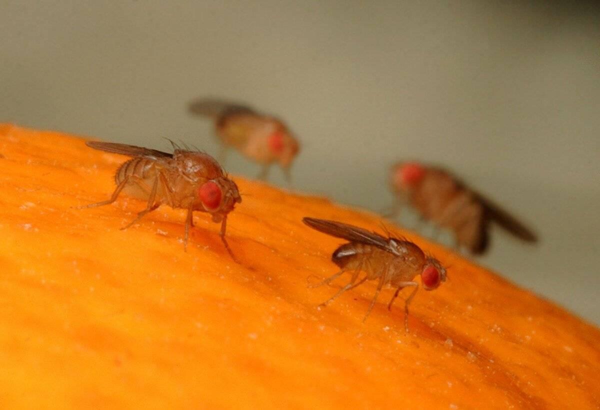 Откуда в доме появляются мухи: основные версии