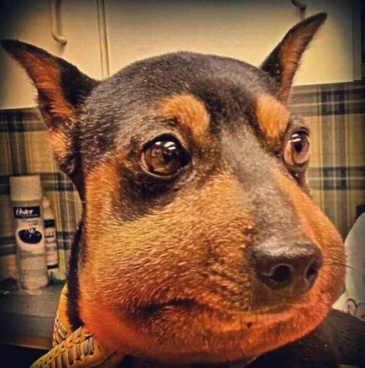 Что делать если собаку укусила оса или пчела   собачий блог