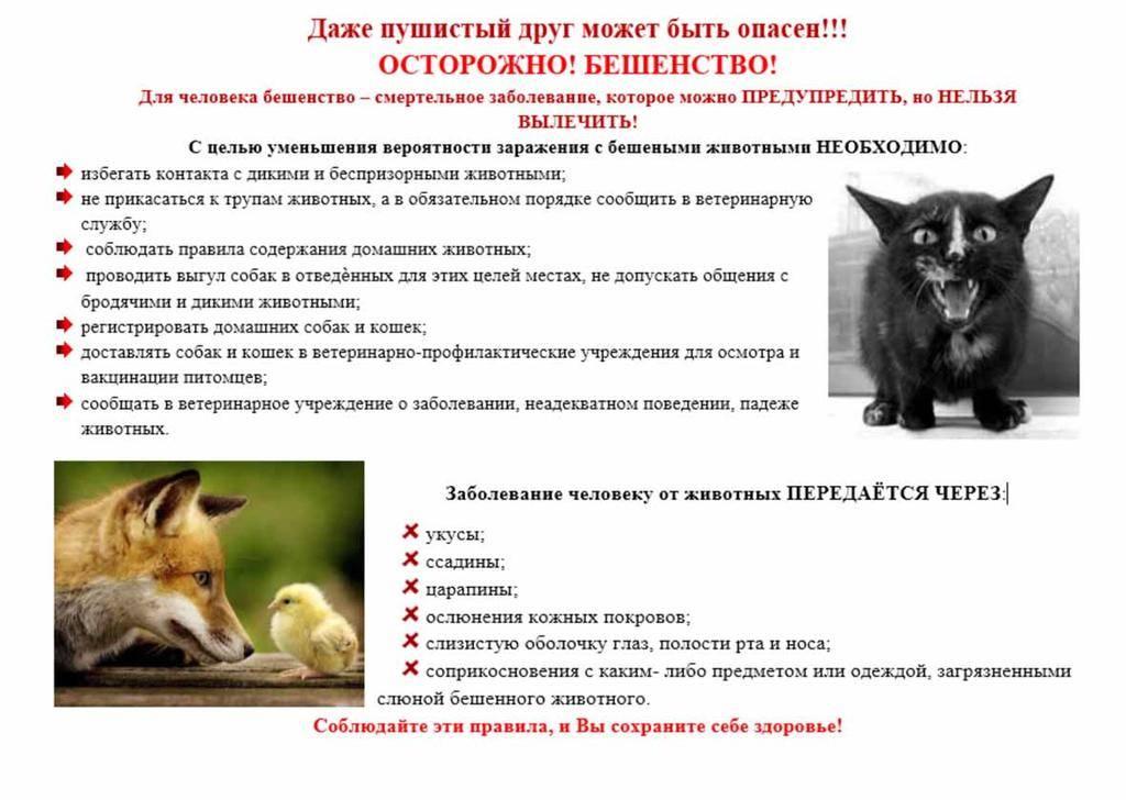 Нападают ли крысы на людей, и чем они опасны?