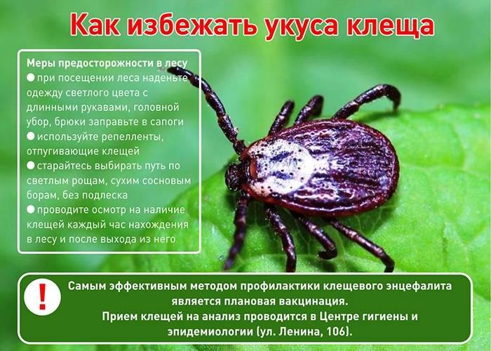 Дезинфекция клеща: фото, видео, обработка участка и методы защиты от клещей