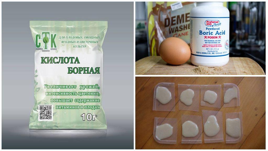 Борная кислота от тараканов - рецепт средства из борной кислоты с яйцом