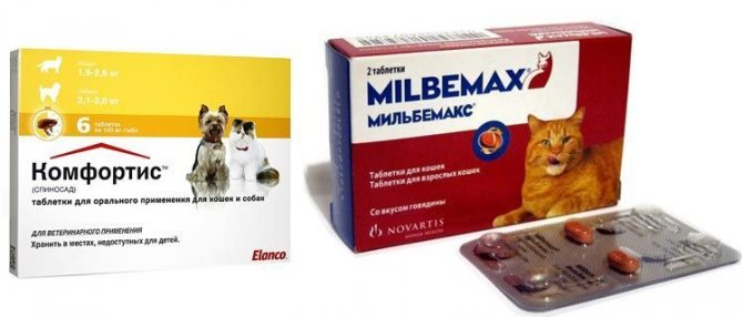 Таблетка от блох для кошек: описание, отзывы, инструкция