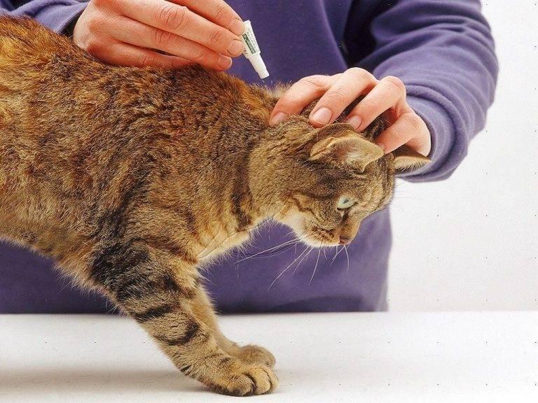 Капли от блох для кошек: как наносить и выбирать