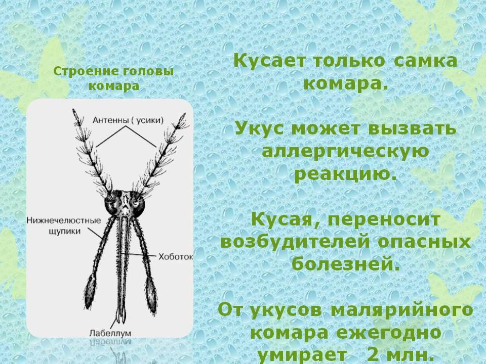 Какие бывают комары