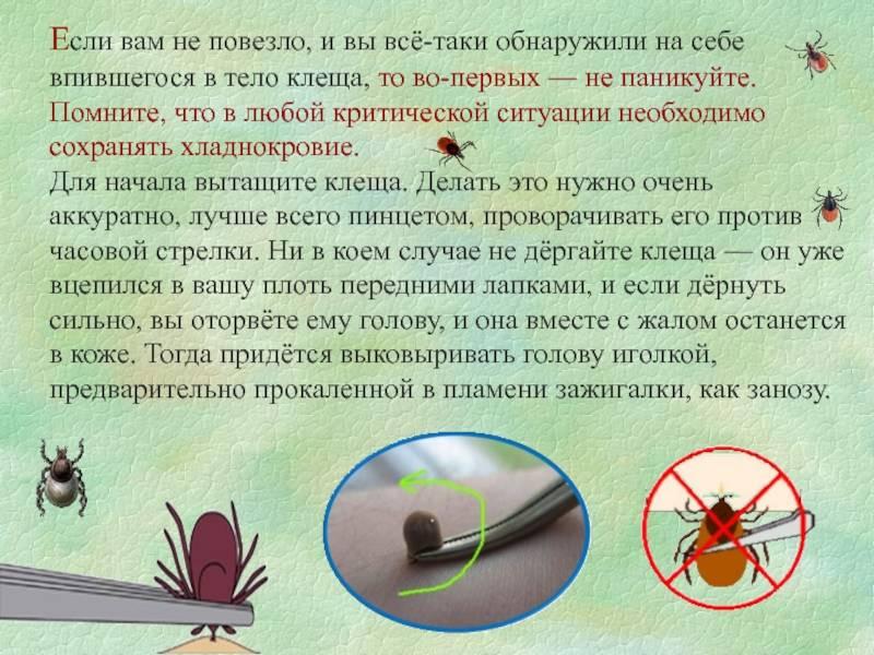 Как выглядит укус клеща на теле человека: фото, как вытащить, срочные меры