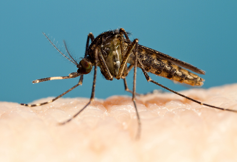 Где живут комары: места обитания