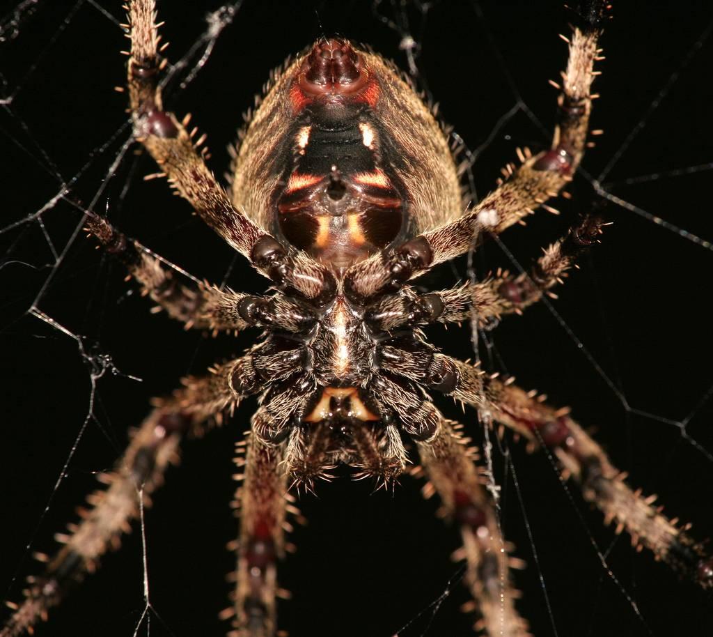 Фильмы ужасов про пауков – 18 самых страшных хорроров
