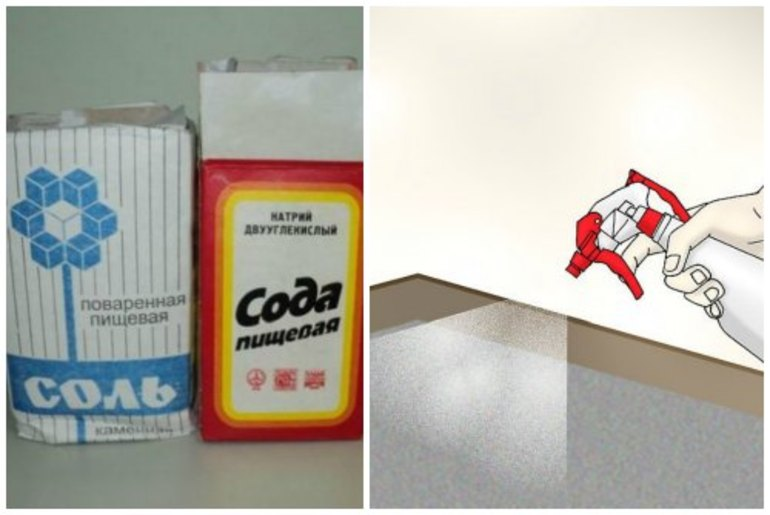 Народные средства от блох у собак и кошек, как избавиться от паразитов в доме, как вывести их из квартиры