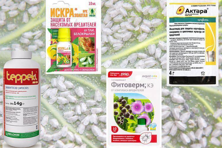 Средства борьбы с белокрылкой в теплице. как выбрать инсектицид