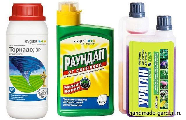 Как избавиться от мокриц в доме, ванной или других помещениях квартиры - различные методы борьбы, в том числе народными средствами