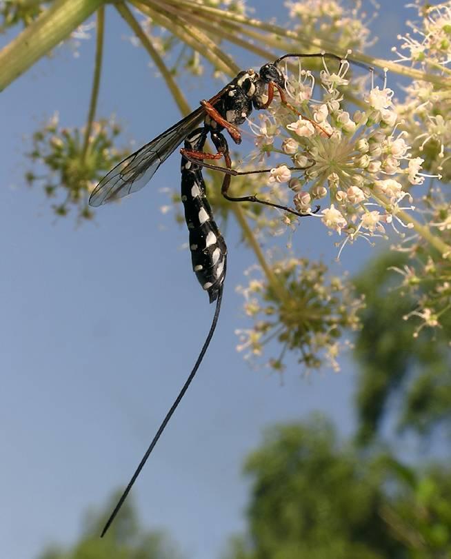 Виды ос – фото и как живут различные представители жалящих насекомых