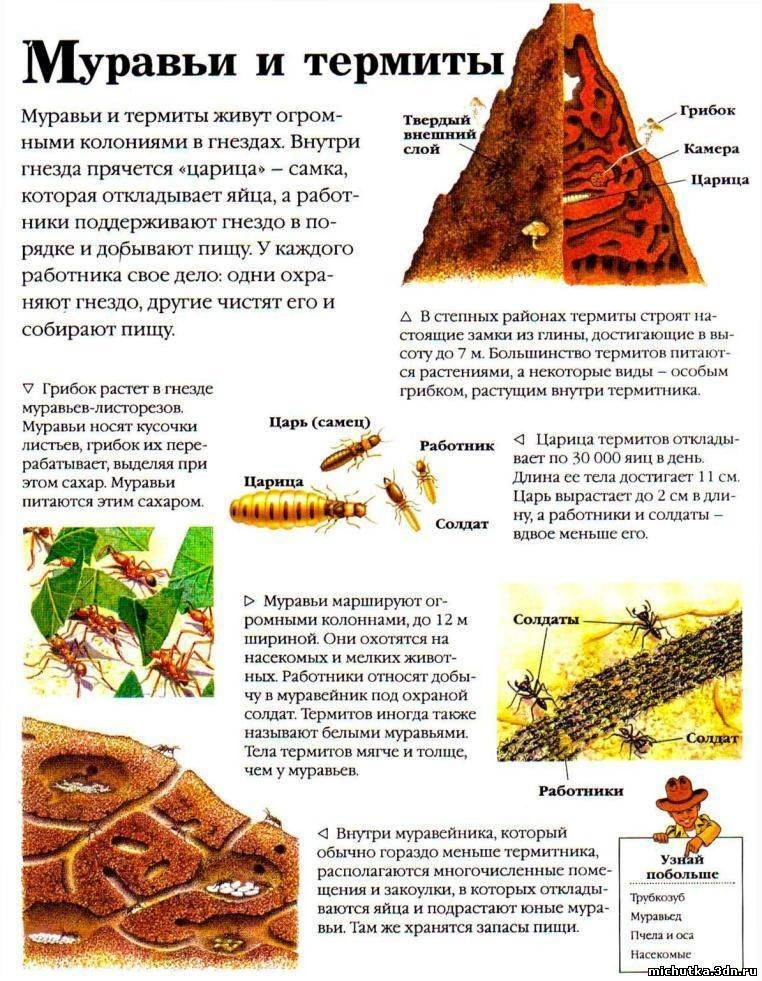 Термитник и уклад жизни его обитателей
