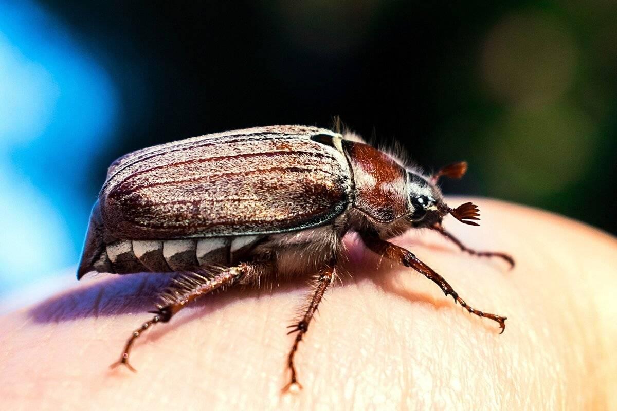К чему снится жук. видеть во сне жук - сонник дома солнца