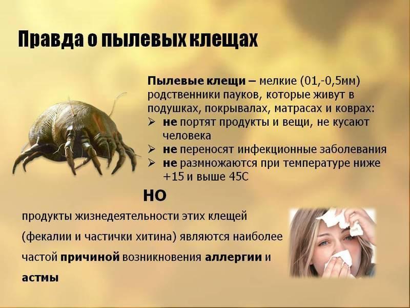 """Перьевые клещи в подушках. откуда берутся, чем опасны, и как вывести - фбуз """"центр гигиены и эпидемиологии в красноярском крае"""""""