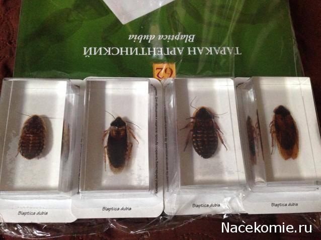 Мадагаскарский таракан любимый питомец