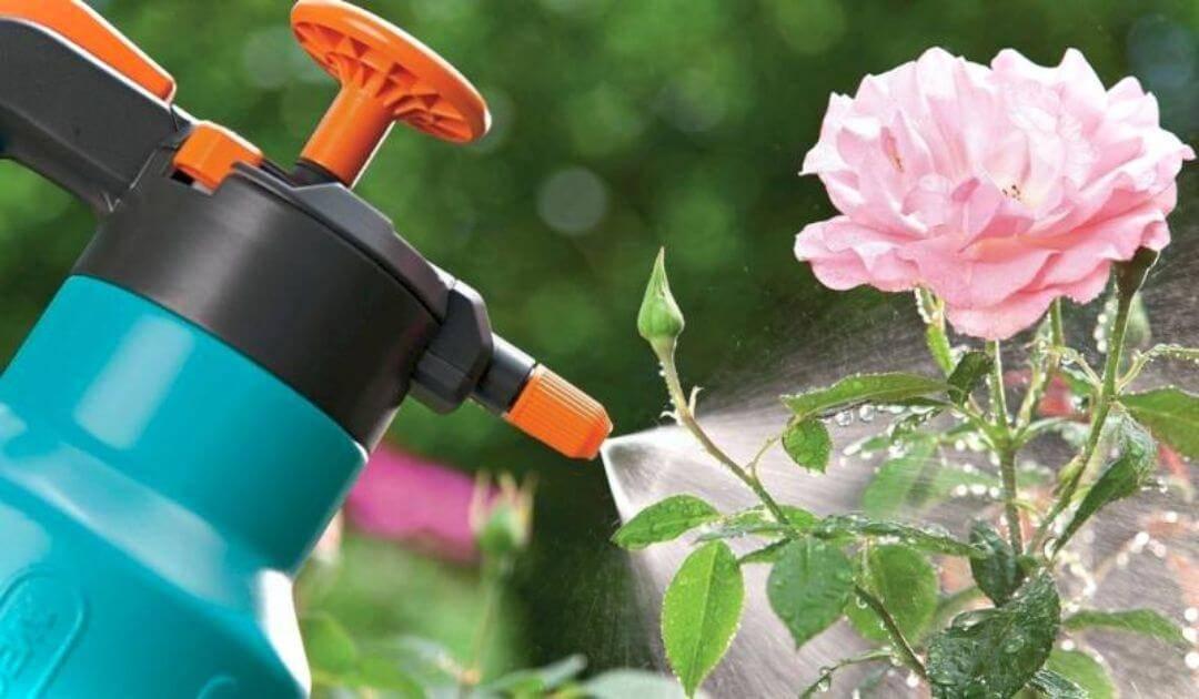 Чем опрыскать деревья от тли и муравьев: во время цветения
