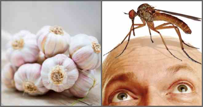 Как избавиться от комаров в походе, на рыбалке и при отдыхе на природе