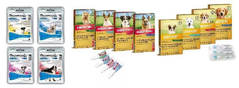 Прививка от блох собаке - польза и вред использования вакцинации