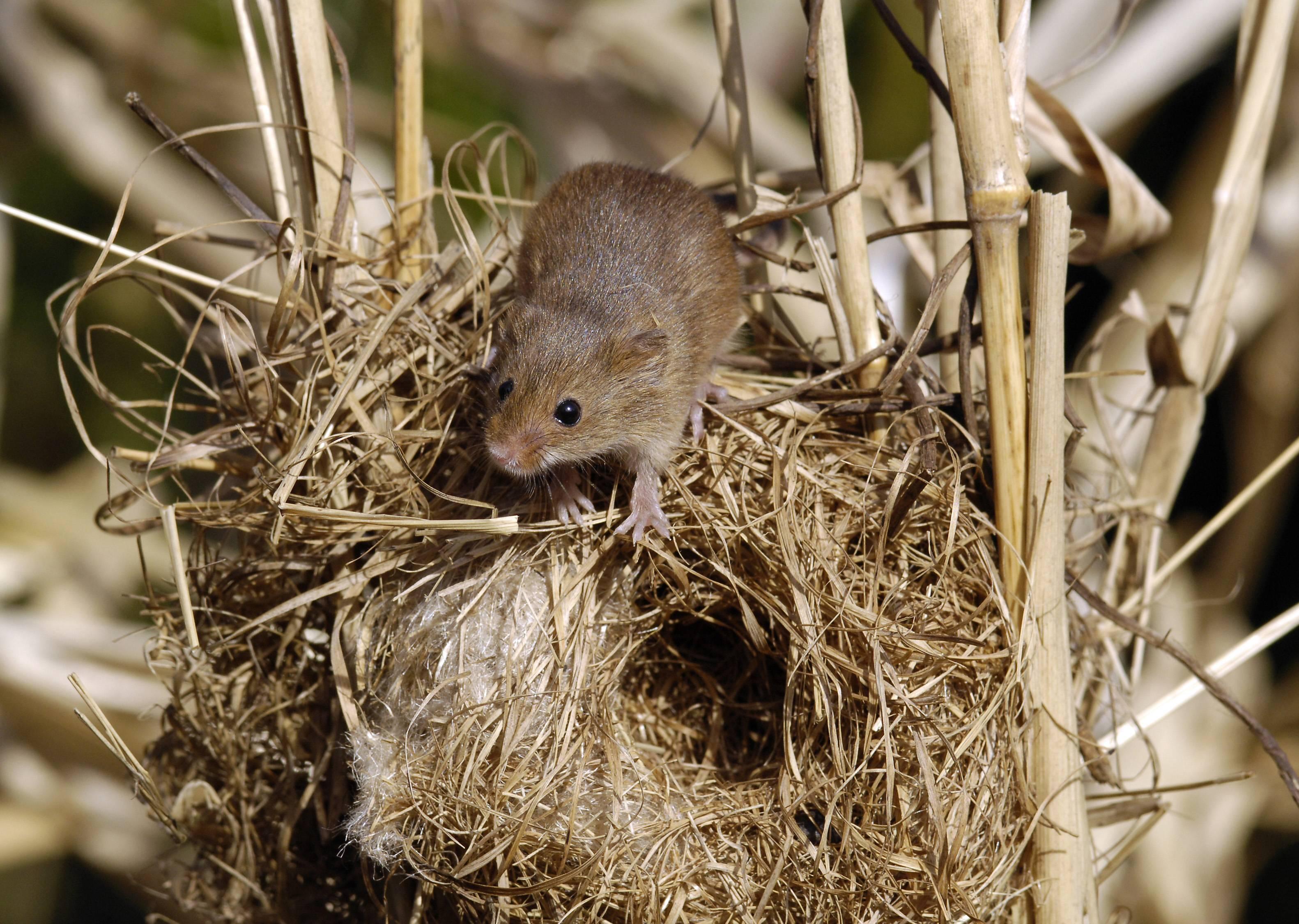 Где живет летающая красавица или среда обитания летучей мыши