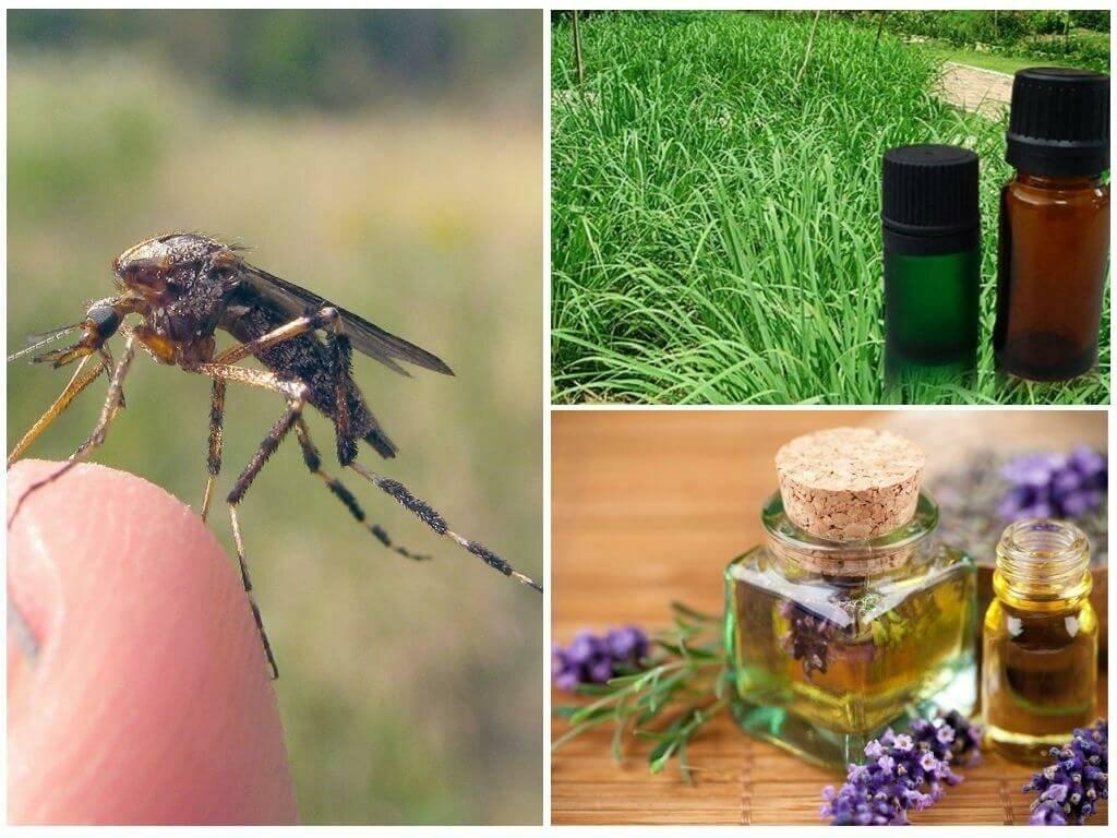 Как защитить себя от комаров и мошек дома и на природе