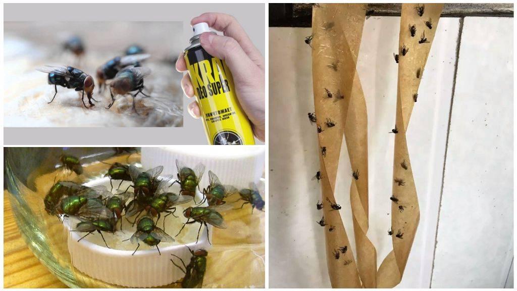 Народные средства от мух - как вывести насекомых в помещении или на участке