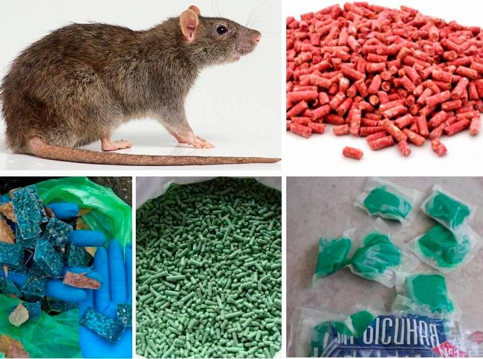 Что делать при отравлении ядом для крыс