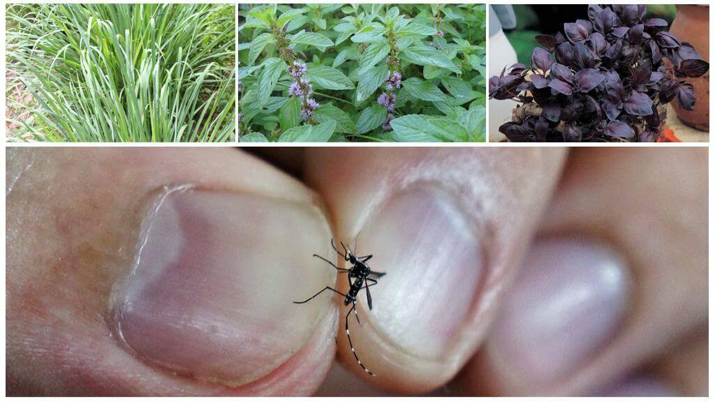 Какие растения отпугивают комаров – топ 5 репеллентов на грядке — agroxxi