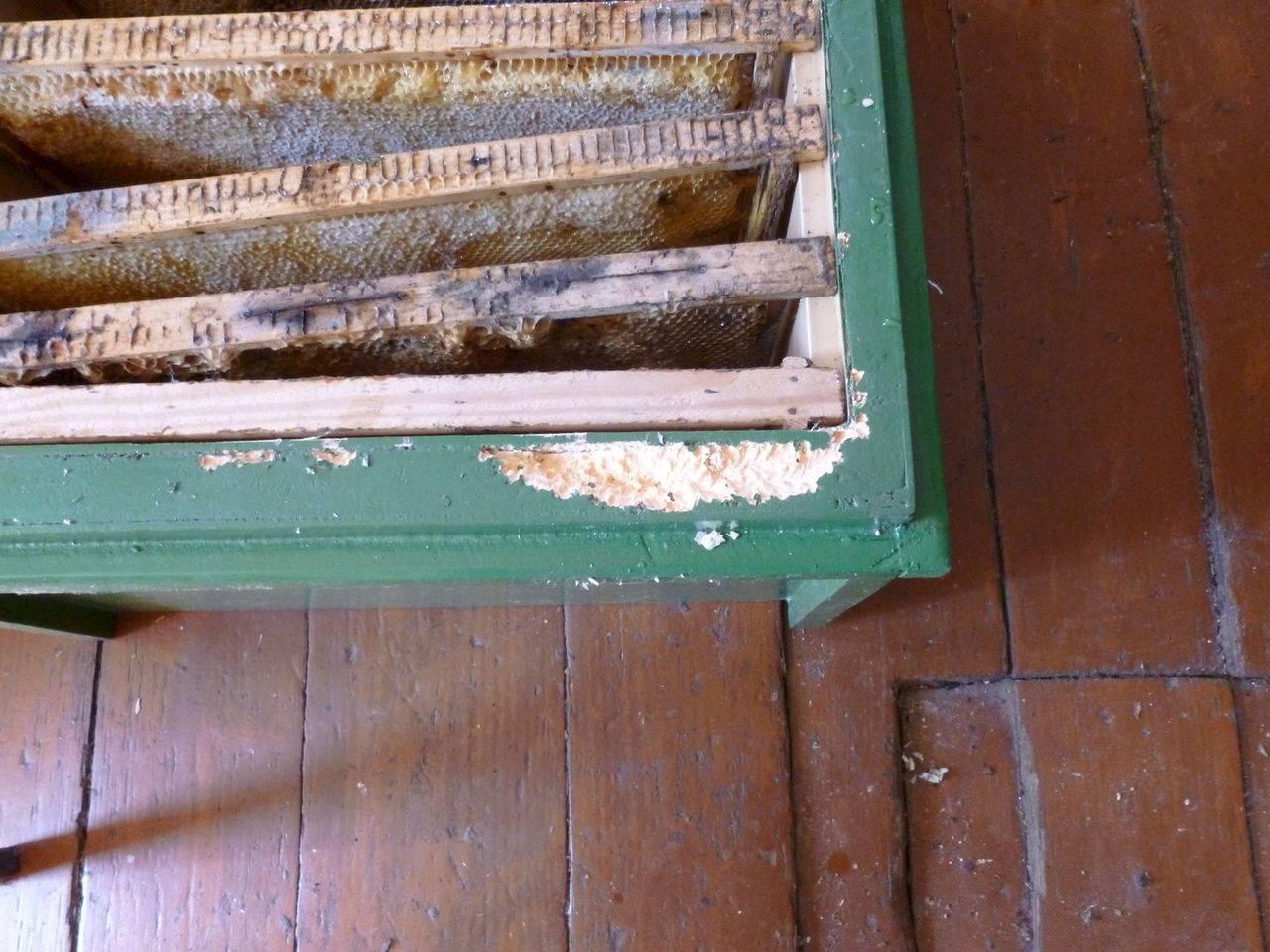 Едят ли мыши пеноплекс и пенопласт - как обезопасить дом. жми!