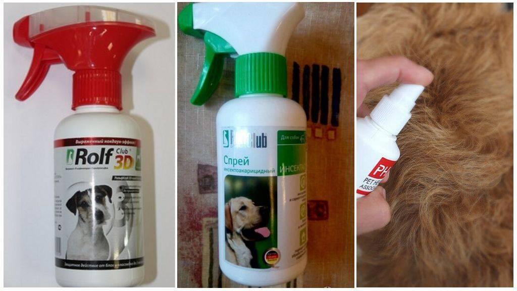 Народные средства от клещей для собак — полезные рецепты с ванилином, водкой, различными ингредиентами