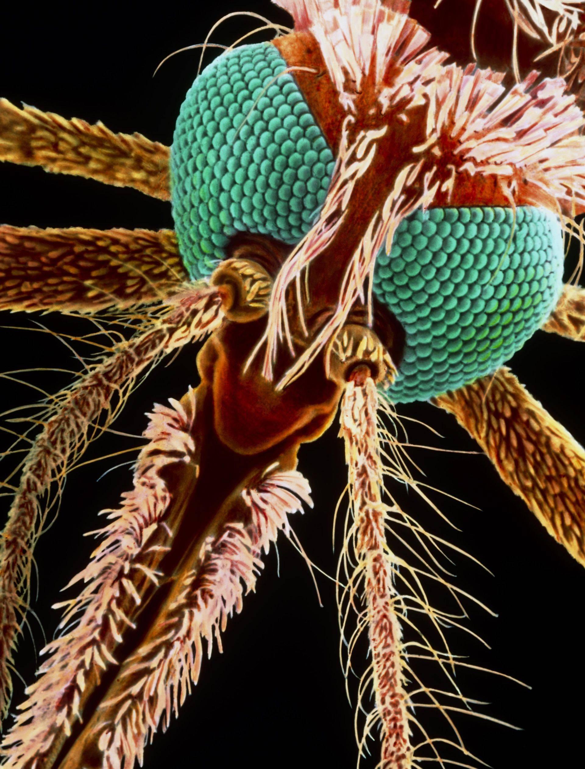 Комары есть ли у них зубы