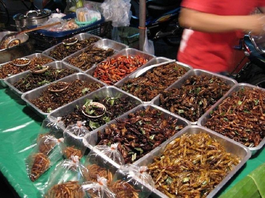 12 самых вкусных блюд из насекомых: дневник группы «удивительный мир»: группы - женская социальная сеть myjulia.ru
