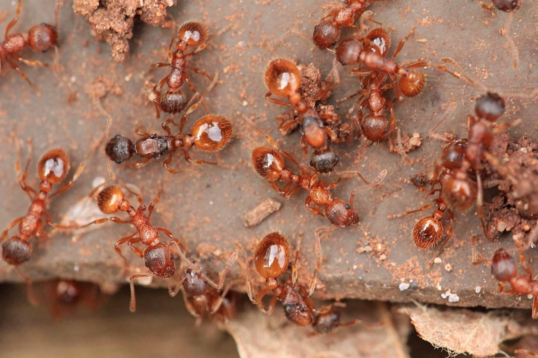 Сонник клещи муравьи паук тля зеленая. к чему снится клещи муравьи паук тля зеленая видеть во сне - сонник дома солнца