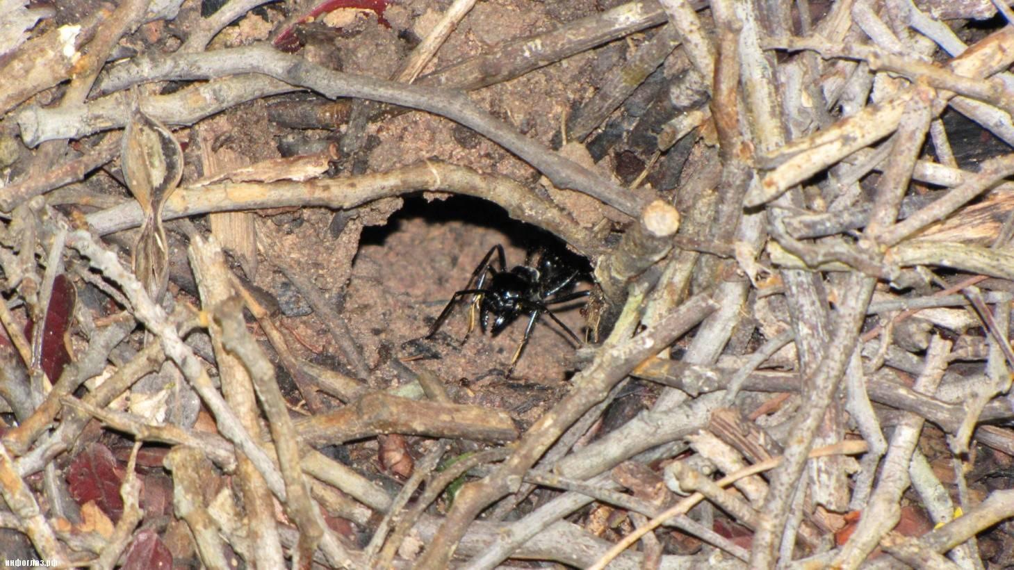 К чему снится  муравейник во сне — по 90 сонникам! если видишь во сне муравейник что значит?