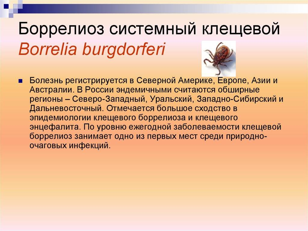 Клещевой боррелиоз: симптомы после укуса боррелиозного клеща у взрослых людей и детей, профилактика, лечение, последствия болезни лайма