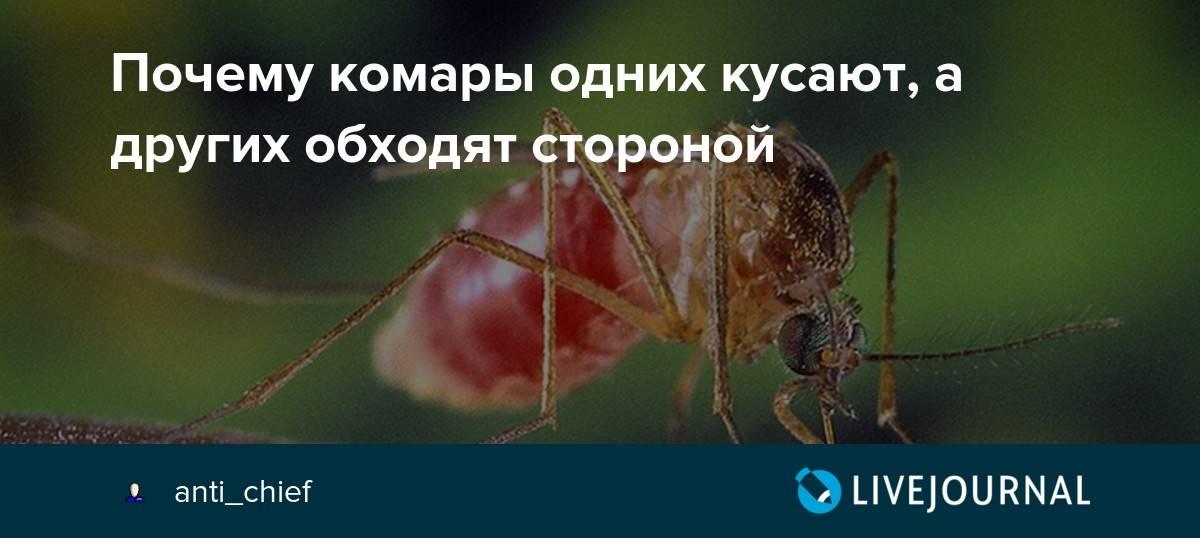 Почему комары кусают одних людей чаще, чем других. есть пять причин - иа «север-пресс»