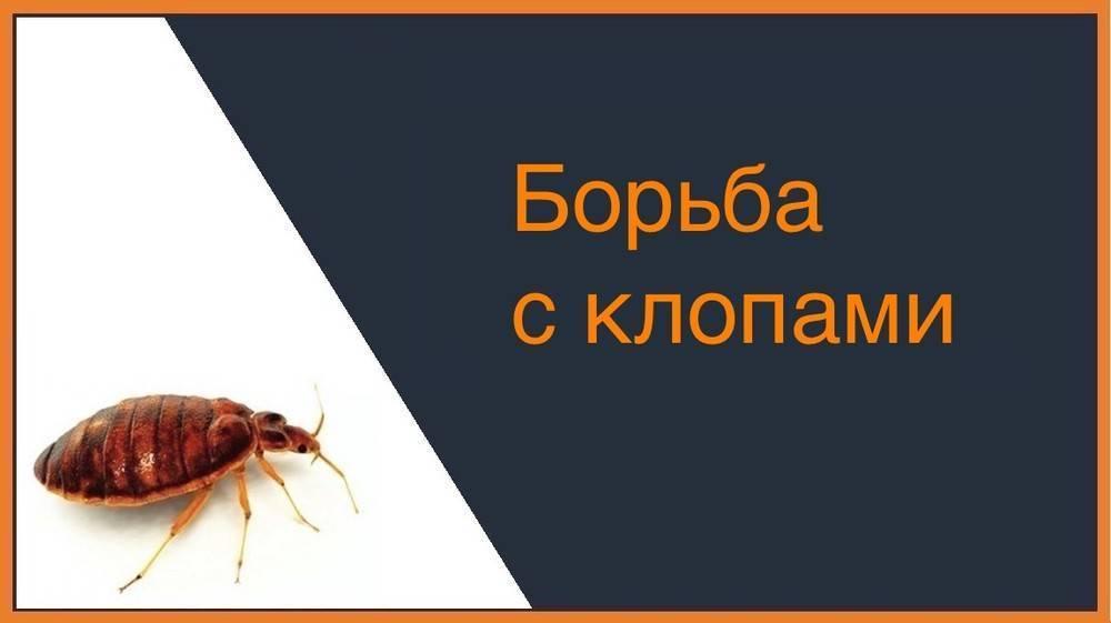 Лучшее средство от клопов и правила избавления от насекомых