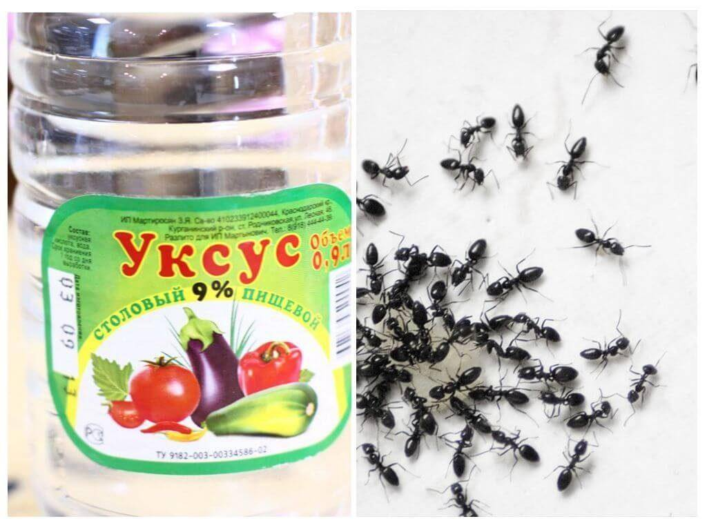 Эти удивительные муравьи — бороться или уживаться?