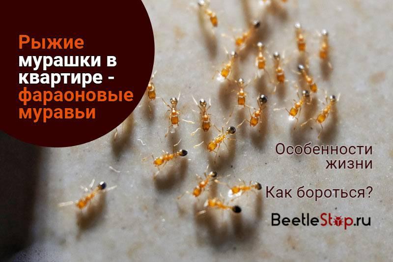 Откуда берутся мураши в квартире и как их отправить обратно
