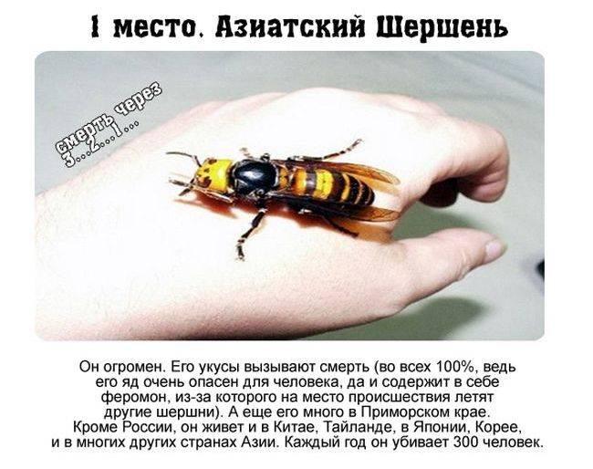 Как выглядит матка пчелы, фото крупным планом, как появляется пчелиная королева, кто оплодотворяет матку