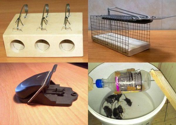 Как самостоятельно сделать эффективную мышеловку из имеющихся подручных материалов + полезные советы по изготовлению и эксплуатации