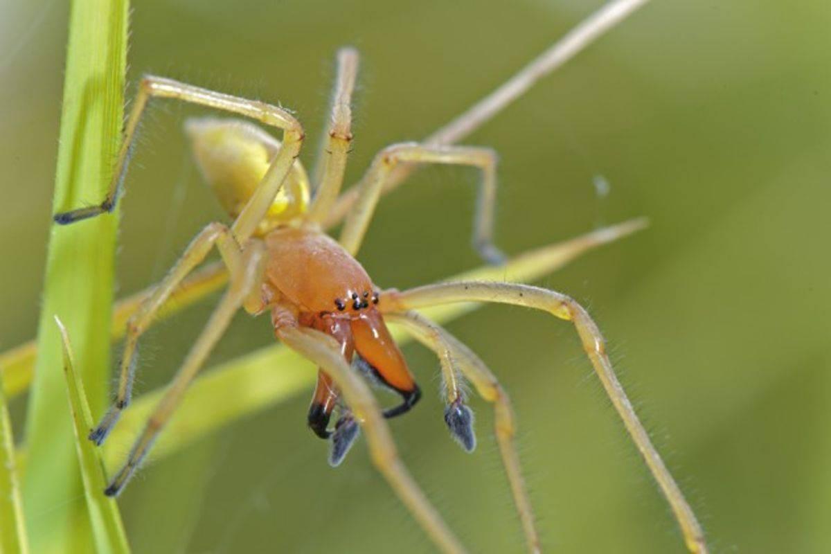 Что делать если укусил паук