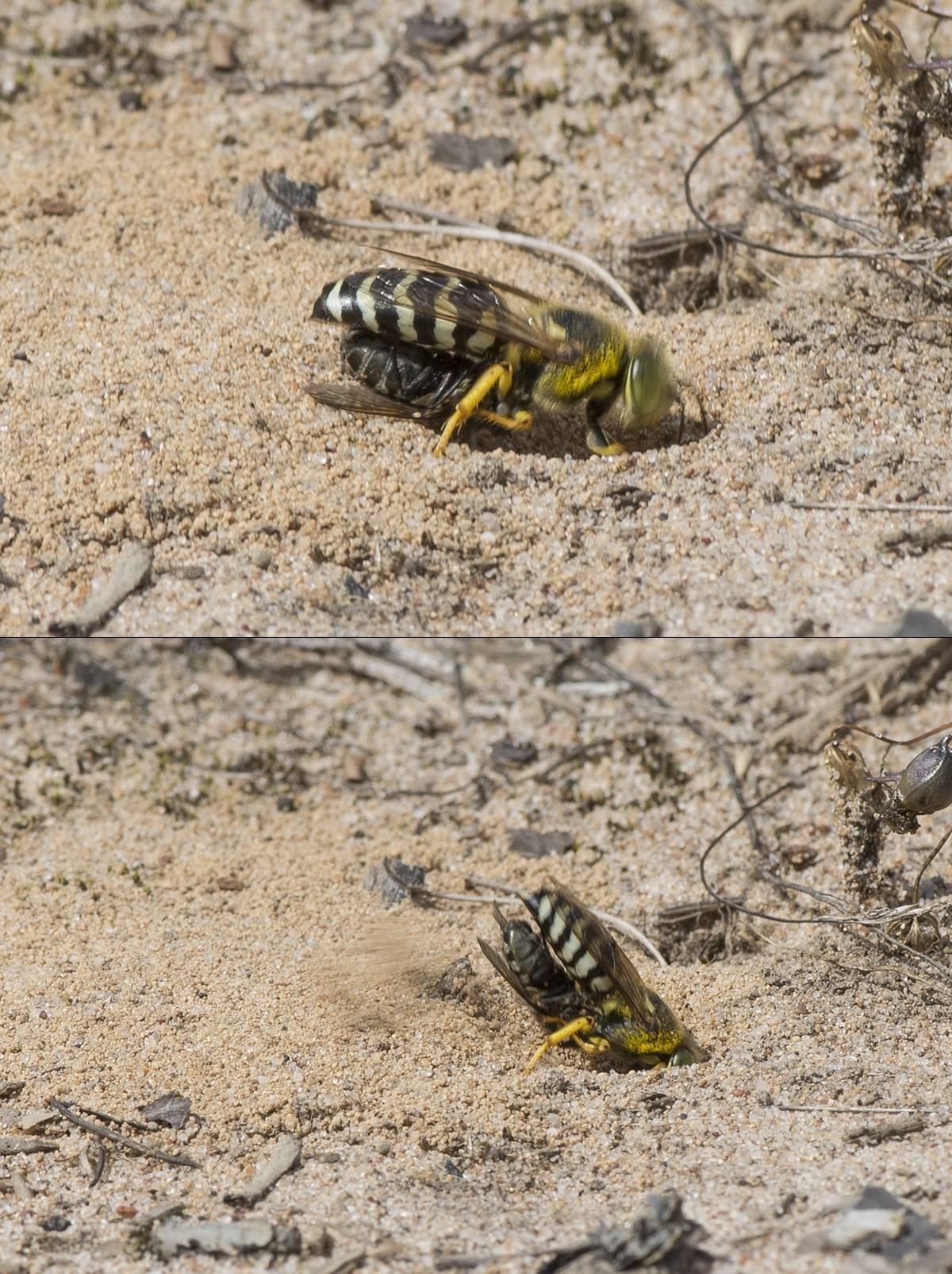 Ультразвуковые отпугиватели мух – описание и отзывы