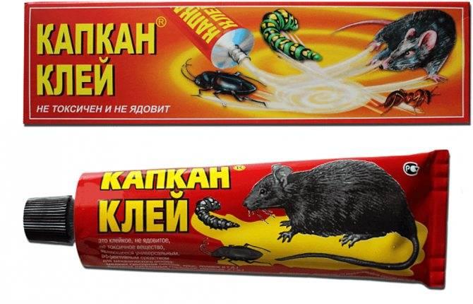ᐉ клей от мышей, крыс и других грызунов: обзор популярных средств, как выбрать подходящий, отзывы - zoovet24.ru