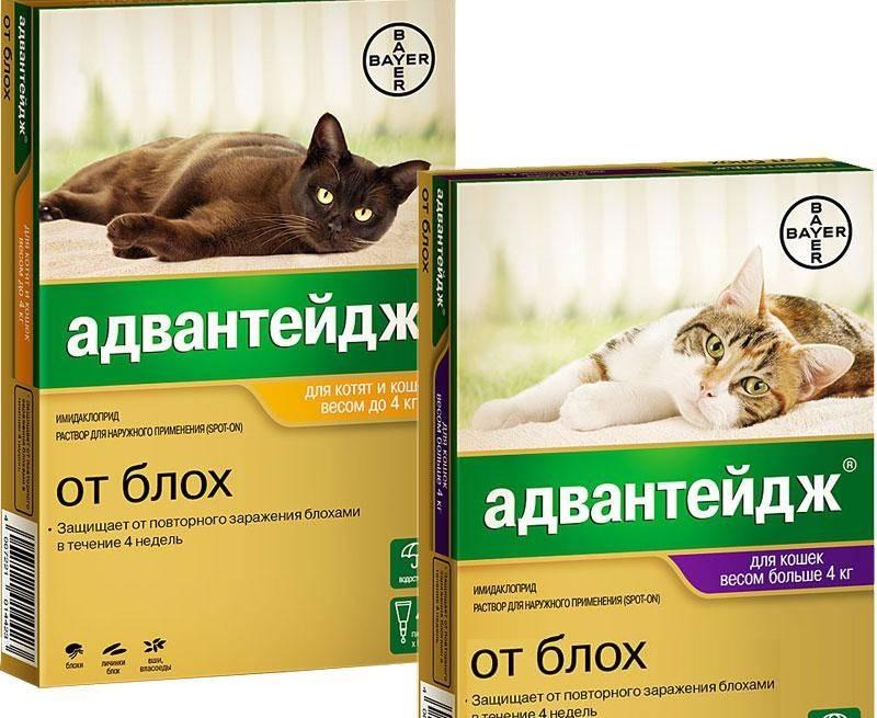 Как вывести блох у кошки и собаки народными средствами: эффективные методы