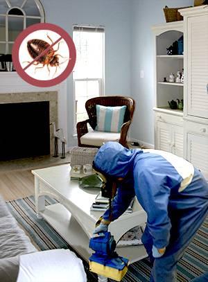 Как избавиться от различных видов клещей в домашних условиях?