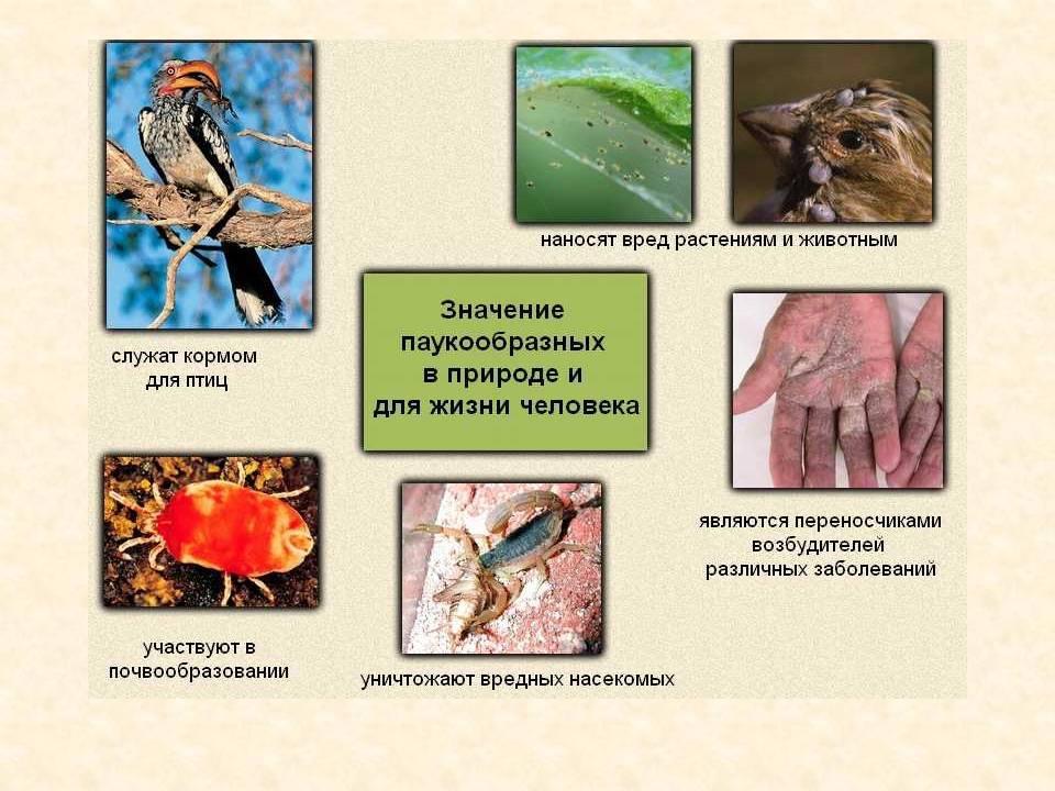Насекомые. их польза и вред для человека и природы, их среда обитания. воспитателям детских садов, школьным учителям и педагогам - маам.ру